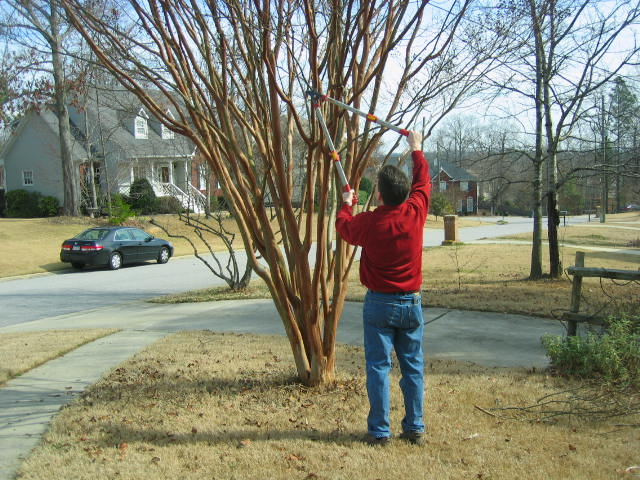 Why Tree Pruning or Lopping Is Best Done In Winter