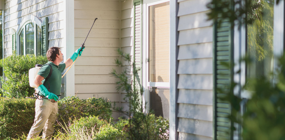 Residential Pest control Gold Coast